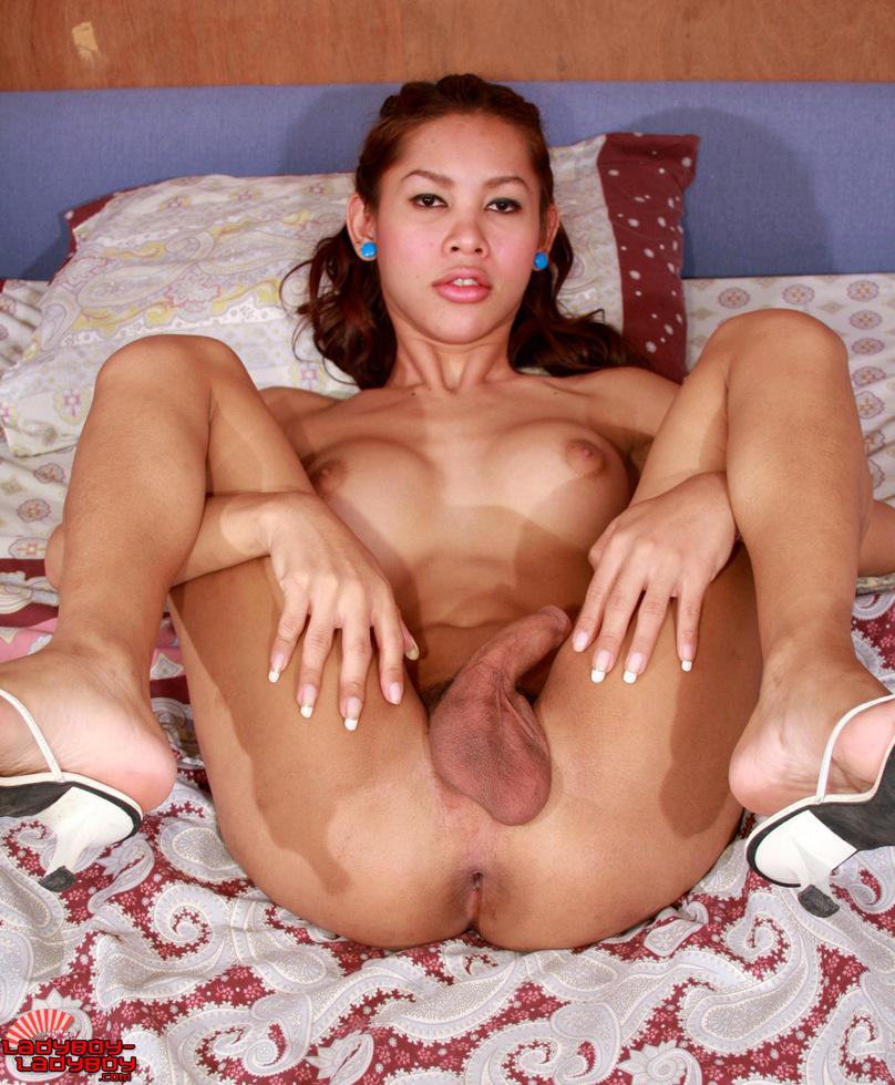 Thai Transexual Por